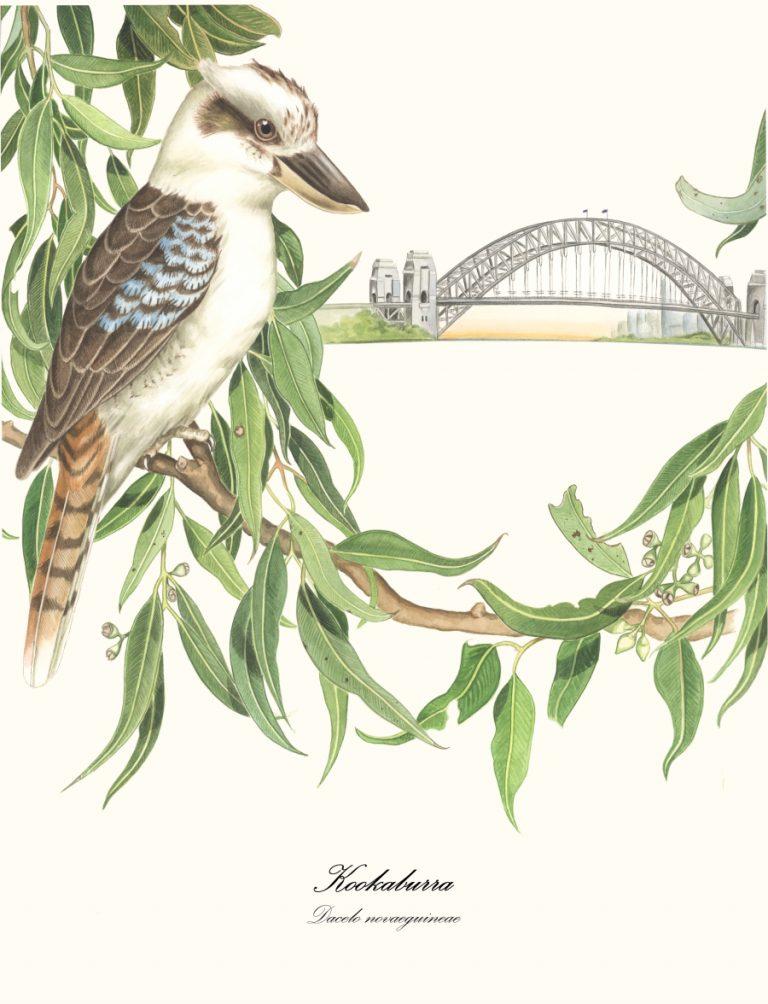 kookaburra and bridge